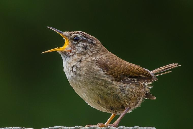 Student voice bird